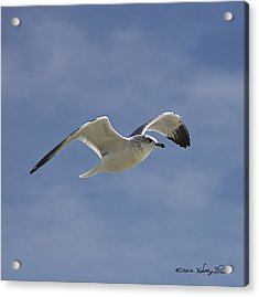 Acrylic Print featuring the photograph Seagull Flight I by Kathy Ponce