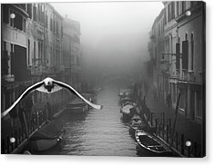 Seagull From The Mist Acrylic Print