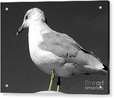Acrylic Print featuring the photograph Seagull In Black And White by Nina Silver