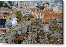 Seagull In Cannes Old City Acrylic Print