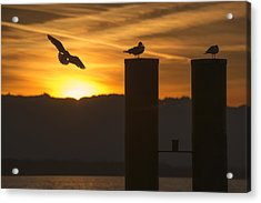 Seagull In The Sunset Acrylic Print by Chevy Fleet