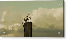 Seagull Lookout Acrylic Print