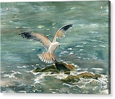 Seagull Acrylic Print by Melly Terpening