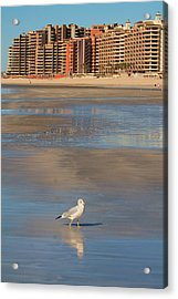 Acrylic Print featuring the photograph Seagull Motel by Alicia Knust
