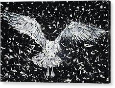 Seagull - Oil Portrait Acrylic Print by Fabrizio Cassetta