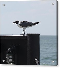 Seagull On Ferry Acrylic Print