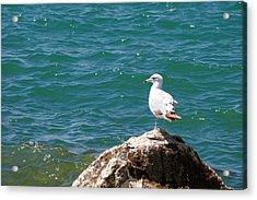Seagull On Rock Acrylic Print