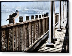 Seagull On The Boardwalk Acrylic Print by Sally Bauer