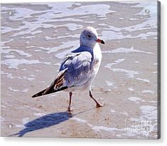 Seagull On The Run Acrylic Print