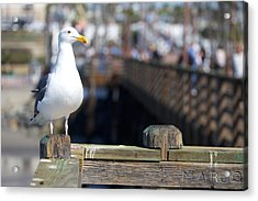 Acrylic Print featuring the photograph Seagull by Robert  Aycock