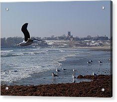 Acrylic Print featuring the photograph Seagull by Robert Nickologianis