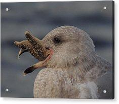 Seagull Series Acrylic Print