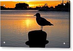 Seagull Silhouette Sunrise Acrylic Print