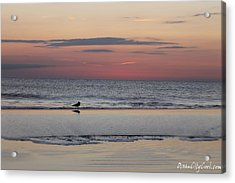 Seagull Strolls The Seashore Acrylic Print by Robert Banach