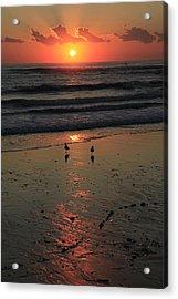Seagull Sunrise Acrylic Print by Noel Elliot