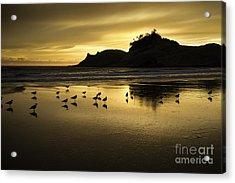 Seagull Sunset At Cape Kiwanda Acrylic Print