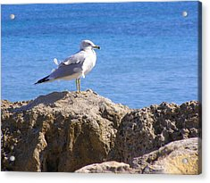 Acrylic Print featuring the photograph Seagull by Artists With Autism Inc