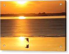Seagull Through Sunset Acrylic Print