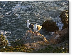 Seagulls Aka Pismo Poopers Acrylic Print by Barbara Snyder