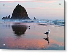 Seagulls And Haystack Rock Acrylic Print