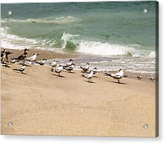 Seagulls And Sandpipers Acrylic Print by Zina Stromberg