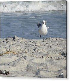 Seagulls At Fernandina 4 Acrylic Print