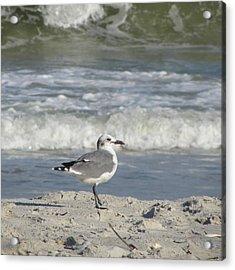 Seagulls At Fernandina 6 Acrylic Print