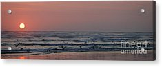 Seagulls At Sunset Acrylic Print
