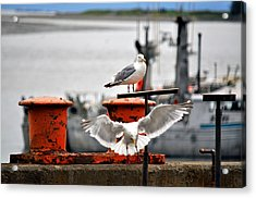 Seagulls Expression Acrylic Print by Debra  Miller