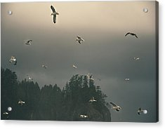 Seagulls In A Storm Acrylic Print