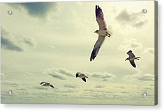 Acrylic Print featuring the photograph Seagulls In Flight by Bradley R Youngberg