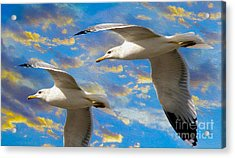 Seagulls In Flight Acrylic Print by Jon Neidert