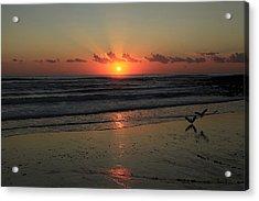 Seagulls Landing At Dawn Acrylic Print by Noel Elliot