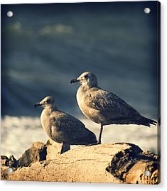Acrylic Print featuring the photograph Seagulls On A Beach by Yulia Kazansky