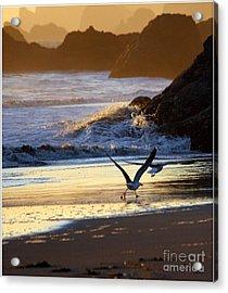 Seagulls On Beach Acrylic Print by Irina Hays