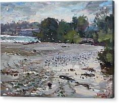 Seagulls On Niagara River Acrylic Print