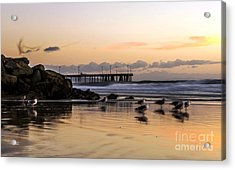 Seagulls On The Coast Acrylic Print by Mike Ste Marie