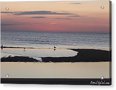 Acrylic Print featuring the photograph Seagulls On The Seashore by Robert Banach