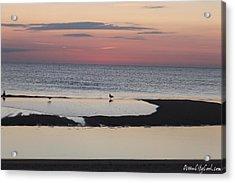 Seagulls On The Seashore Acrylic Print by Robert Banach
