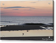 Seagulls Sea And Sunrise Acrylic Print by Robert Banach