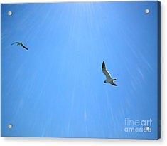 Seagulls Soar Acrylic Print by Audrey Van Tassell