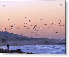 Seagulls Sunrise Acrylic Print