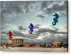 Seahorse Dance Acrylic Print by William Fields