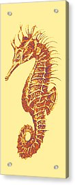 Seahorse - Right Facing Acrylic Print
