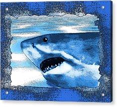 Seahunt Acrylic Print by Christopher Korte