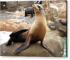 Acrylic Print featuring the photograph Seal In The Spotlight by Amanda Eberly-Kudamik