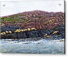 Seal Island Acrylic Print by Thomas Michael Meddaugh