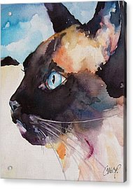 Seal Point Siamese Cat Acrylic Print