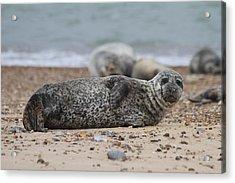 Seal Pup On Beach Acrylic Print by Gordon Auld