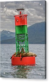 Seals Resting On Buoy Acrylic Print by Tom Norring